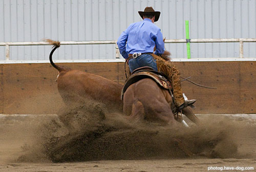 John Swales Performance Horses